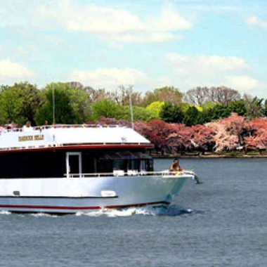 Whether you're single or in love, a boat tour is the perfect way to see the cherry blossoms.