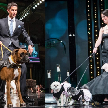Models walk with their dogs down the runway.
