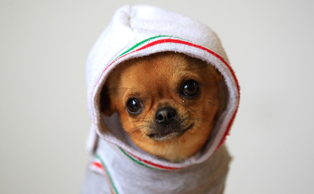 doggiecute