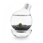 Marimo moss ball light bulb aquarium from Common Goods (Photo by Common Goods)