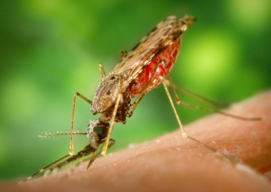 Mosquitoes don't migrate very far, so just clearing out stagnant water will drastically decrease the likelihood of mosquito bites. (Photo: Centers for Disease Control and Prevention)