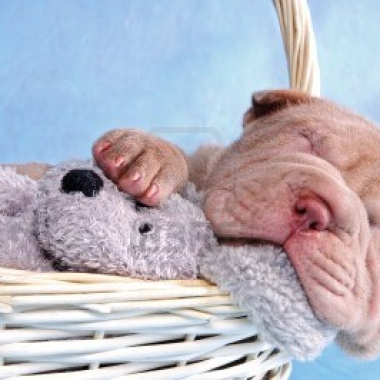dconheels-tini howard-healthy-sleep on it-sep 2013