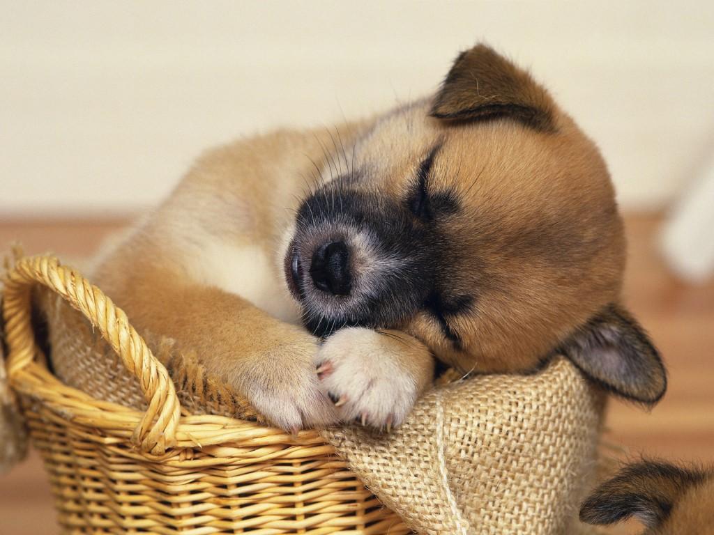 Sleep like this guy. (Photo: New Picx)