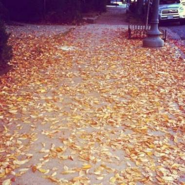 Fall is here (Kristy McCarron/DC on Heels)