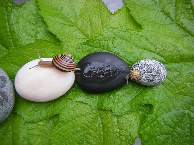 Snail slime for fabulous skin (Photo: Margaret Oomen)