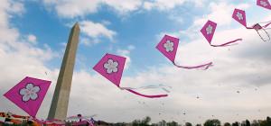 Cherry blossom kites at the 2012 Blossom Kite Festival. (Photo: Daniel Sone)