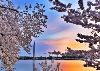 The Washington Monument on Friday framed by cherry blossoms. (Photo: Wolfpackwx/Flickr)