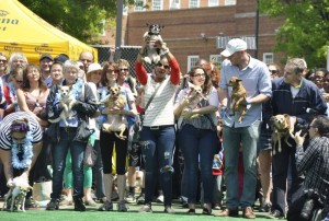 The 2013 Running of the Chihuahuas. (Photo: On Tap Online)