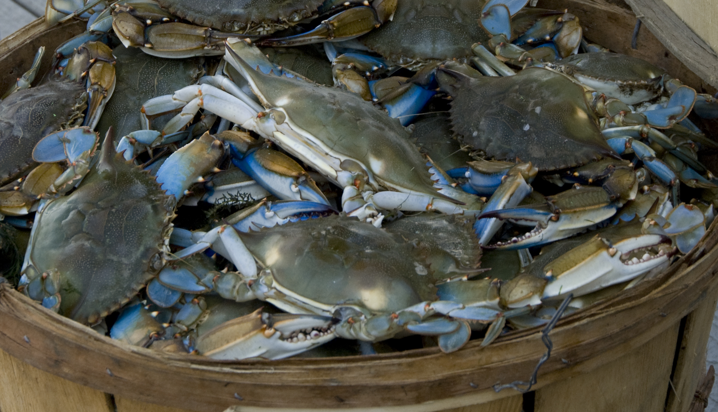 City Tap House is offering unlimited Maryland blue crabs, jambalaya rice ad corn on the cob for $35 on Labor Day. (Photo: St. Mary's County Division of Tourism)