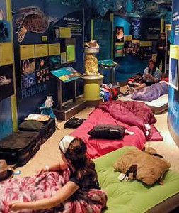 Kids sleepover in the Smithsonian Museum of Natural History. (Photo: Smithsonian Natural History Museum)