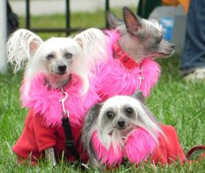 A dog costume contest will be part of Pet-A-Palooza. (Photo: Washington Humane Society/Facebook)