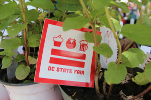 The D.C. State Fair features fruits and vegetables among other contests. (Photo: D.C. State Fair)