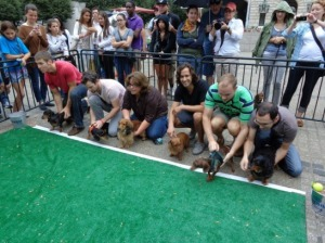 Dachshunds prepare to race at the 2013 Wiener 500. (Photo: ontaponline)