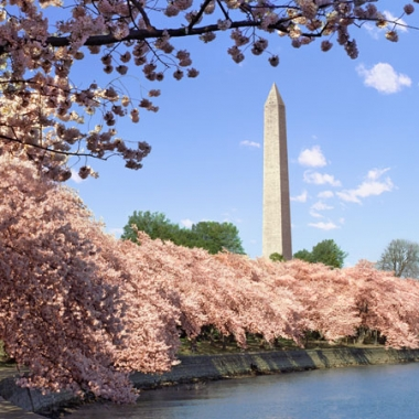 The National Cherry Blossom Festival kicks off this weekend even without the blossoms. This scene is from 2014. (Photo: Getty Images)