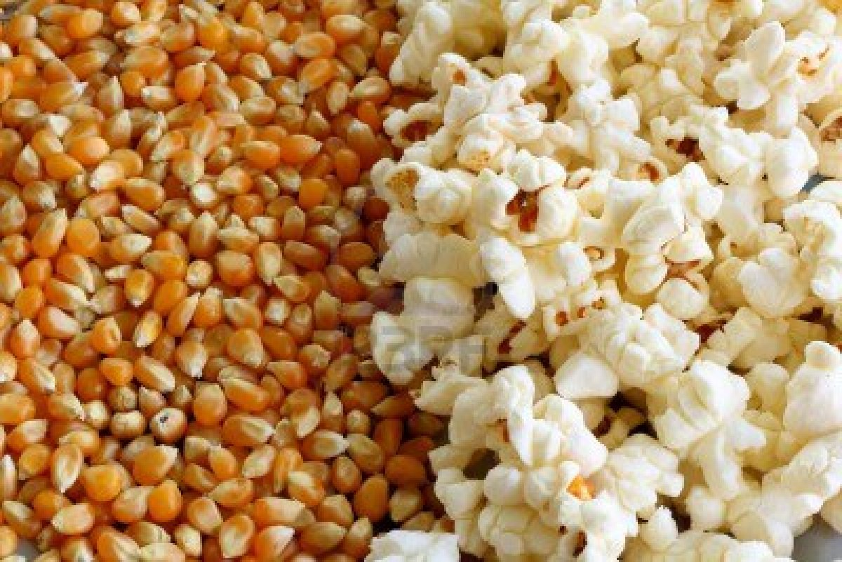 A drop of water inside the kernel makes the popcorn pop. (Photo: Downeast Food Distributors)