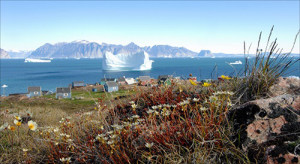 Flowers bloom on a hill overlooking the settlement of Qaarsut, Greenland. (Photo: Wilfred Richard)