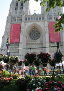 The National Cathedral's annual plant festival is back this weekend. (Photo: Carol Ross Joynt)