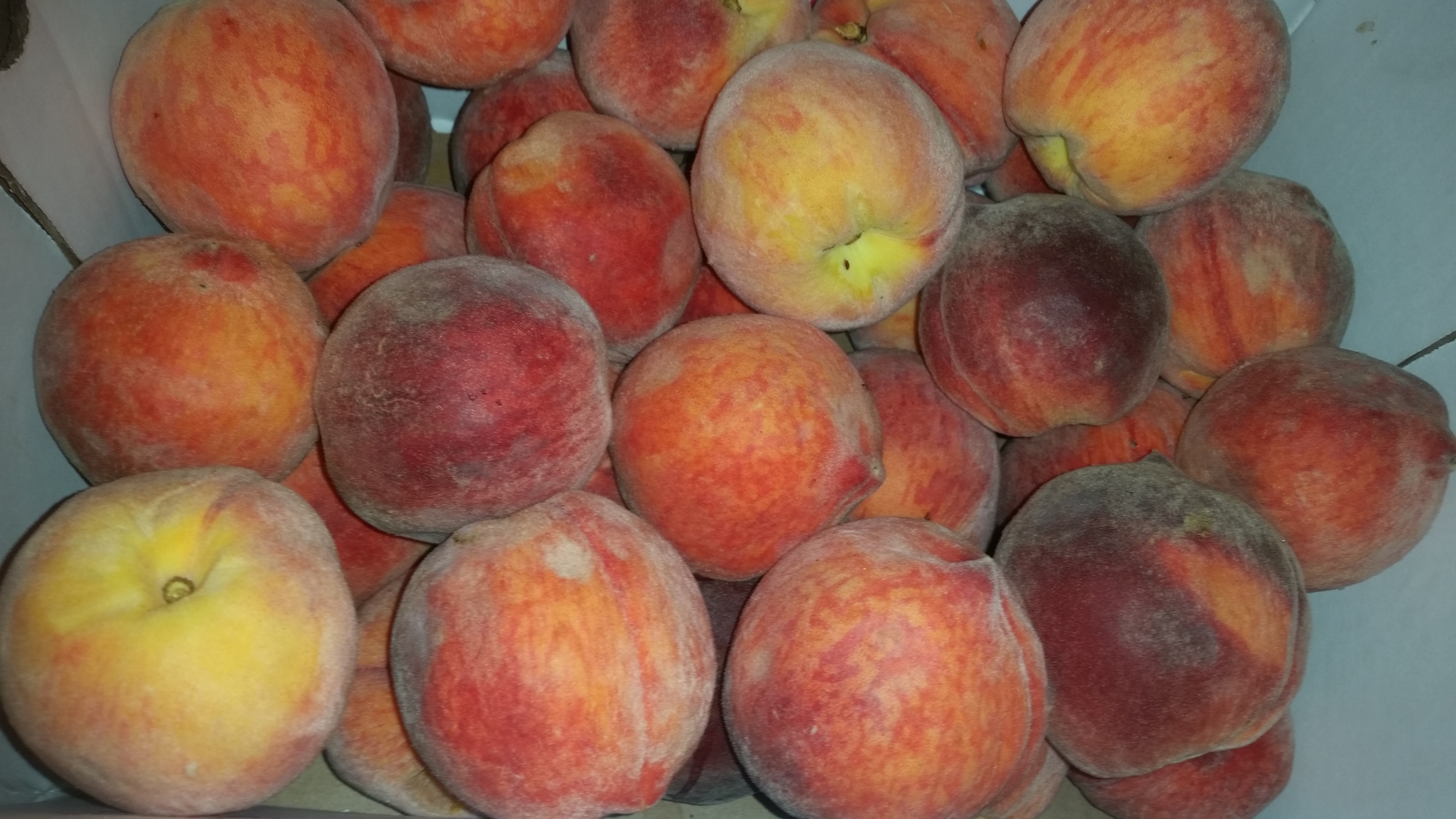 Fresh, ripe peaches are great for baking. (Photo: Mark Heckathorn/DC on Heels)