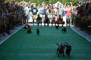 The Wiener 500 Dachshund Dash moves to Yards Park this year. (Photo: On Tap)