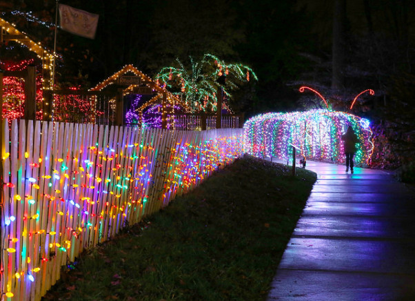 Over a million lights decorate Brookside Gardens in Wheaton. (Photo: Montgomery Parks)
