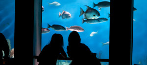 This weekend, admission to the National Aquarium in Baltimore is only $1. (Photo: National Aquarium)This weekend, admission to the National Aquarium in Baltimore is only $1. (Photo: National Aquarium)