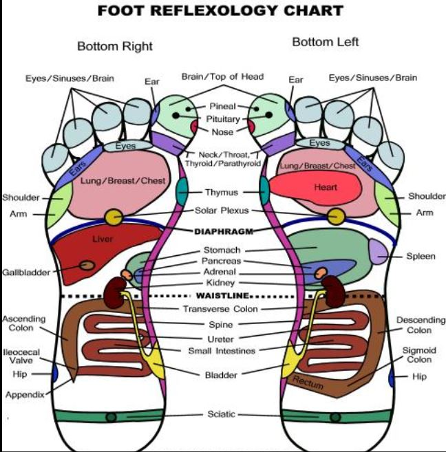 In reflexology, the feet are a microcosm of the entire body. (Graphic: Pure and Simple Living)