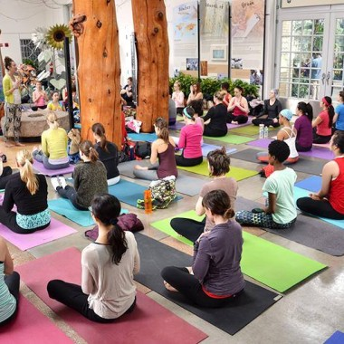 Practice yoga among the plants at the U.S. Botanical Gardens (Photo: WithLoveDC)