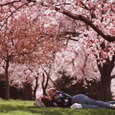 Lay under the cherry blossoms this spring with someone special. (Photo: romanticideasinlife.wordpress.com)