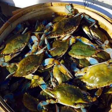 The blue crab population in the Chesapeake Bay has increased since last year, according to a survey by the Maryland Department of Natural Resources. (Photo: Maryland Department of Natural Resources)