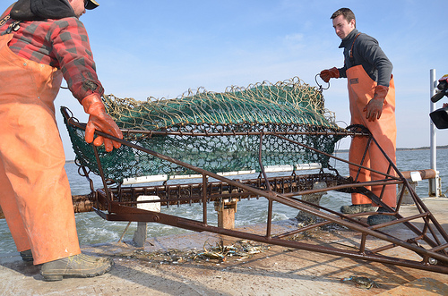 Surveyors counted the number of crabs in the Chesapeake Bay and it's tributaries over the winter. (Photo: Maryland Department of Natural Resources)