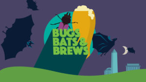 Bugs, Bats & Brews is in Constitution Gardens on the Mall beginning at 7 p..m. (Image: National Geographic)