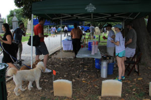 Take your dog out for a day of fun at Congressional Cemetery on Saturday. (Photo: Congressional Cemetery)