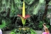 The 6-year-old corpse flower is reaching peak bloom this weekend at the U.S. Botanic Garden. (Photo: Jacquelyn Martin/AP)