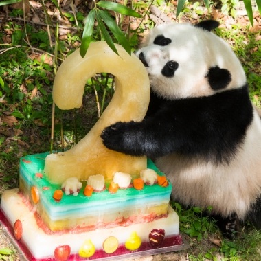 Bao eats her frozen fruit cake last year. (Photo: Jim and Pam Jenkins)
