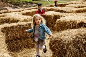 Mount Vernon's Fall Harvest Days features a hay bale maze and other activities. (Photo: George Washington's Mount Vernon)