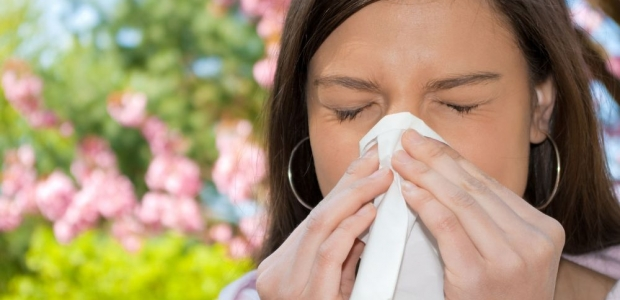 Tree pollen and mold are the primary allergens during the springtime