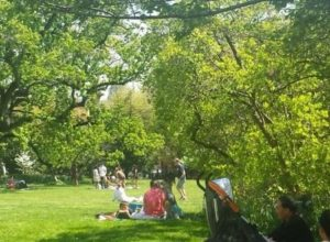 Picnic in the gardens to Tudor Place on Saturday. (Photo: Tudor Place)