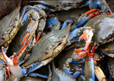 The blue crab popluation in the Chesapeake Bay is down 18 percent this year according to the state's dredge report. (Photo: Ivy City Smokehouse/Facebook)