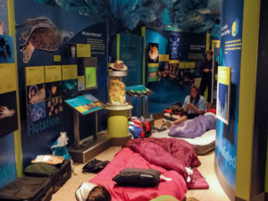 Kids and parents can sleepover at the Natural History Museum on Friday night. (Photo: Steve Hajjar/Smithsonian Associates)