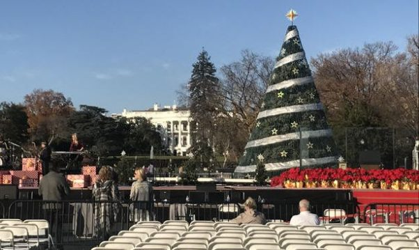 Workers prepare the 2017 National Christmas Tree for its lighting on Nov. 30 at 5 p.m. (Photo:NBC Washington)