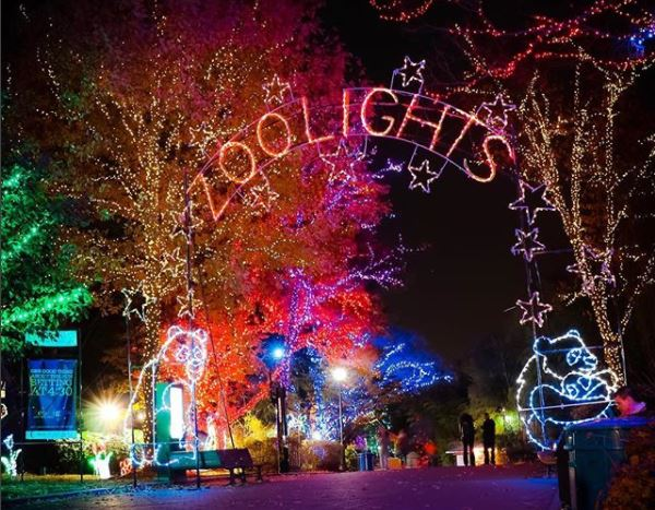 ZooLights at the National Zoo features more than 500,000 LED lights. (Photo: b.deee/Instagram)