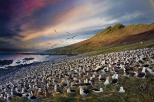 While these albatrosses sit on their nests, warming and protecting their chicks, their partners soar above the ocean, swooping down to catch prey. Standing on a mound of tussac grass for a better vantage, Wilkes took 926 photos in 26 hours, using about 80 to make this image. (Photo: Stephen Wilkes)