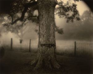 A new exhibit at the National Gallery of Art featurs artist Sally Mann including this photograph <em>Deep South, Untitled (Scarred Tree)</em>. (Photo: Sally Mann)