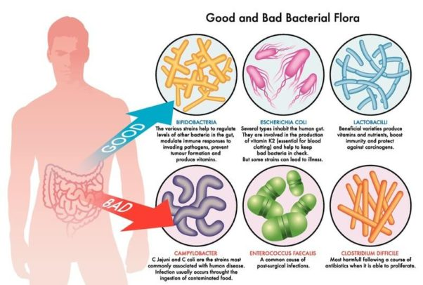 Both good and bad bacteria live in your gut.  You need a proper balance. (Image: Can Stock Photo)