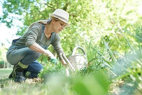 When gardening or working where there may be poison ivy or poison oak, wear long pants, socks and gardening glove to avoid contact. (Photo: goodluz/Shutterstock)