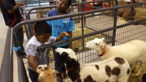 Two African American children looking at goats in a pen at the fair. (Photo: Prince George's County Fair)