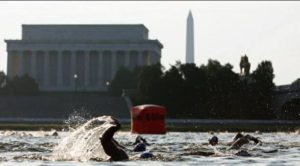Swimmiers in the Potomac River swim past the Lincoln Memorial with the Washington Monument in the background. (Photo: Escape Series Triathlon)