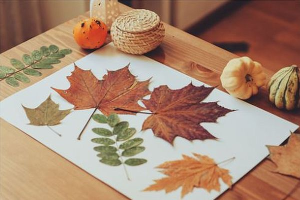 Five autumn leaves laying on a sheet of paper with gourds sitting on the table beside the paper. (Photo: Shutterstock)
