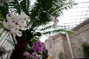 White and purple orchids in the Kogod Courtyard. (Photo: Libby Weiler)
