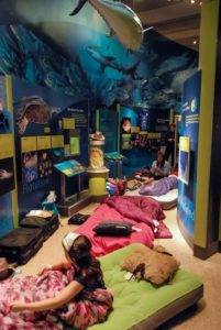 Kids sleeping under a whale hanging from the celiving in the National Museum of Natural History. (Photo: Steve Hajjar/Smithsonian Associates)
